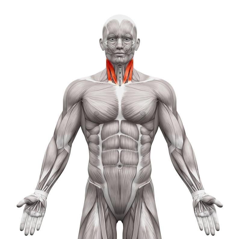 Nacken Hals Triggerpunktmassage